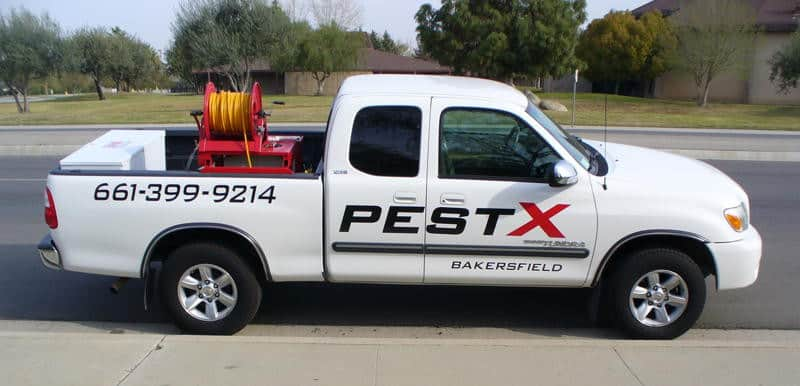 pest control Bakersfield, Pest X Bakersfield